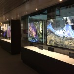 Level 1 Changing Nature exhibits